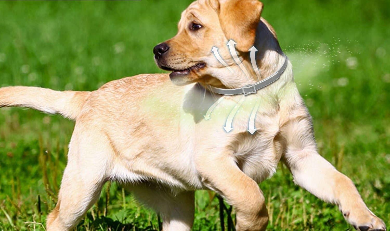 Flea And Tick Collar For Dogs Fleas Dogs Flea And Tick
