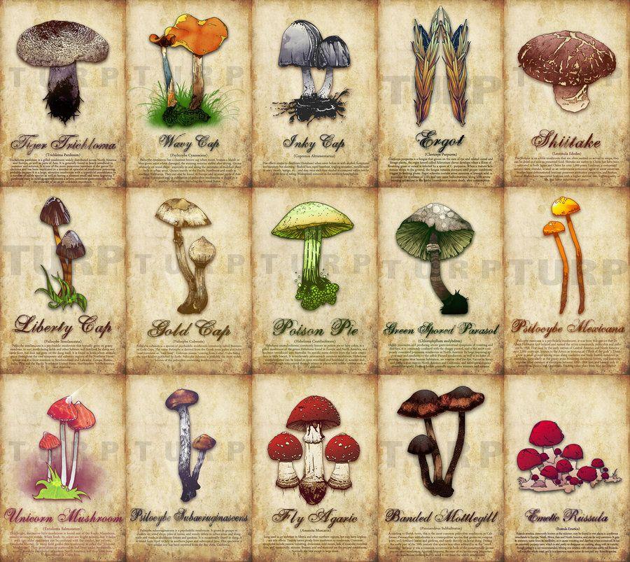 Mushroom Poster by ~turp on deviantART | Fiber Fungi | Pinterest ...