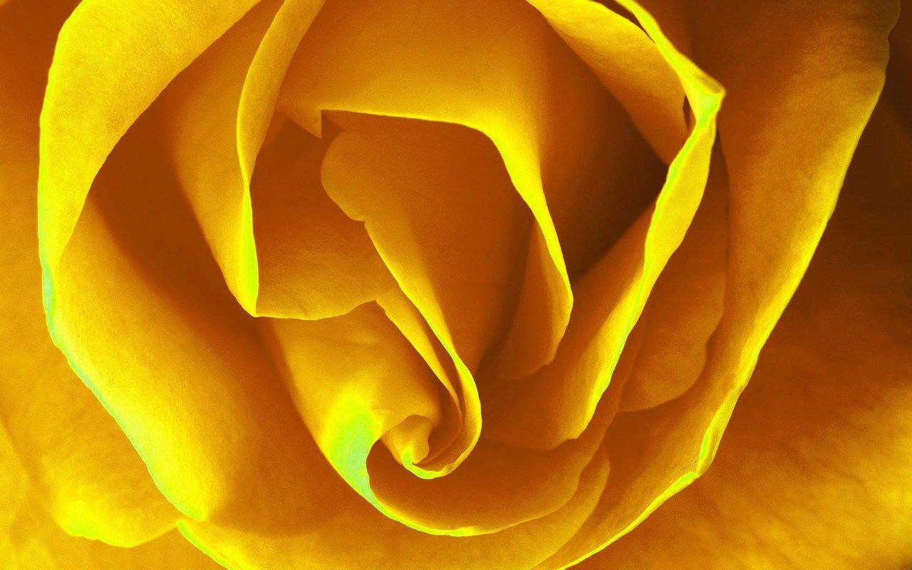Wallpaper Images Rose Rose Category Ololoshenka Pinterest