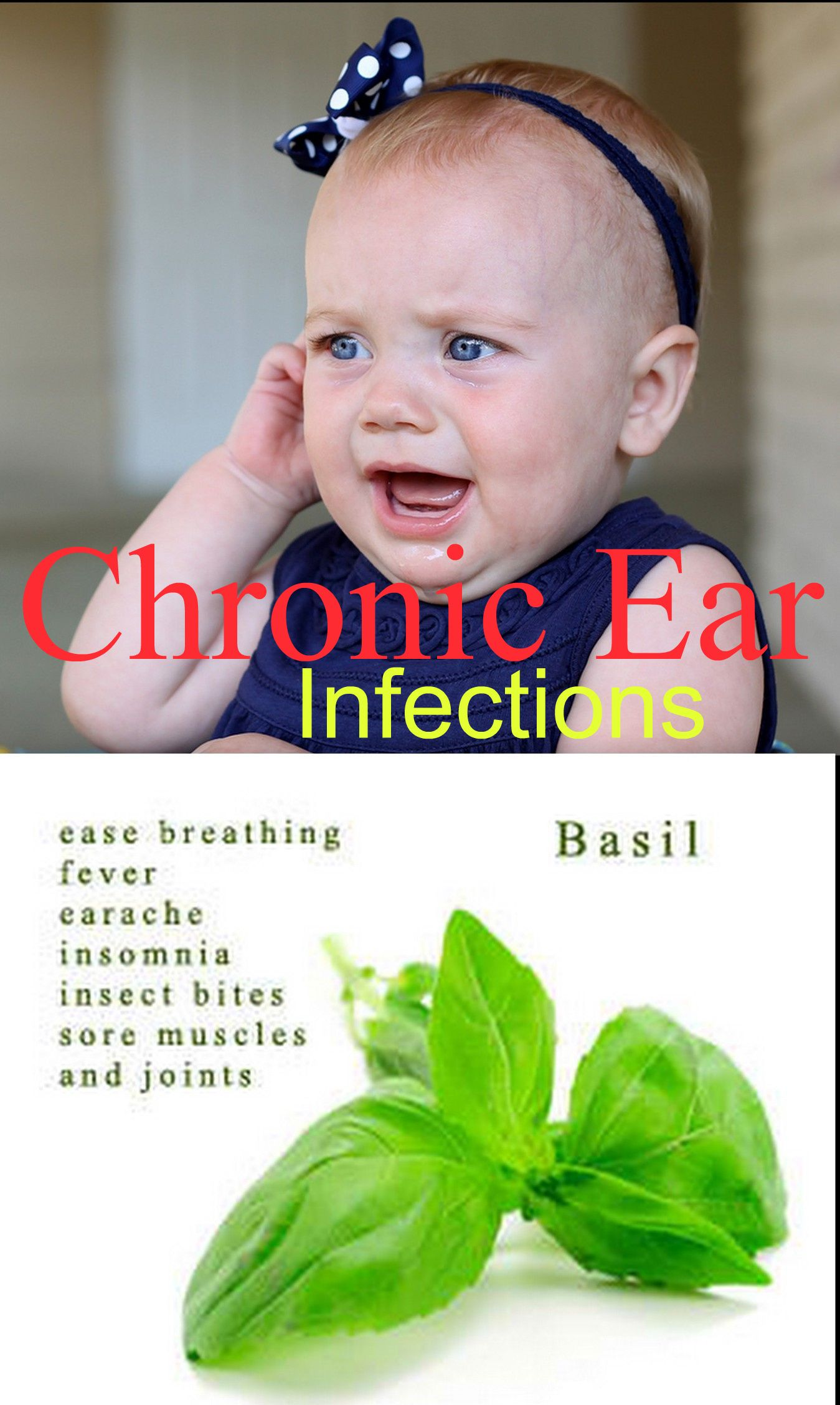How to Beat Chronic Ear Infections with Basil! #kids #goodtoknow @Maria Pfuehler
