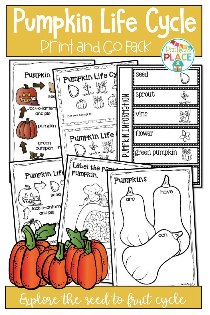 Pumpkin Life Cycle Activities and Worksheets Pumpkin