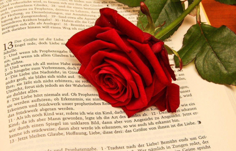Библия с розой картинки