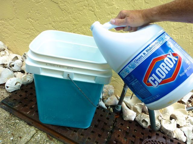 how to clean seashells with bleach