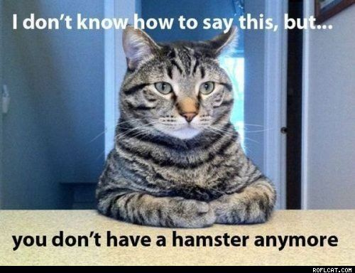 You Don't Have A Hamster Anymore