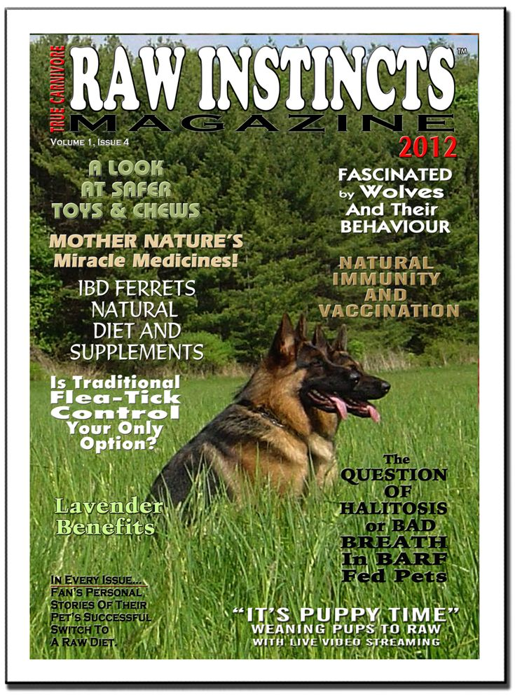 April 2012 Issue covering Toys & Chews, Vaccination, Ferrets & IBD, Natural Flea & Tick Control, Raw-fed Pets & Bad Breath, and lots more!! Click through to read the issue; subscriptions are free!
