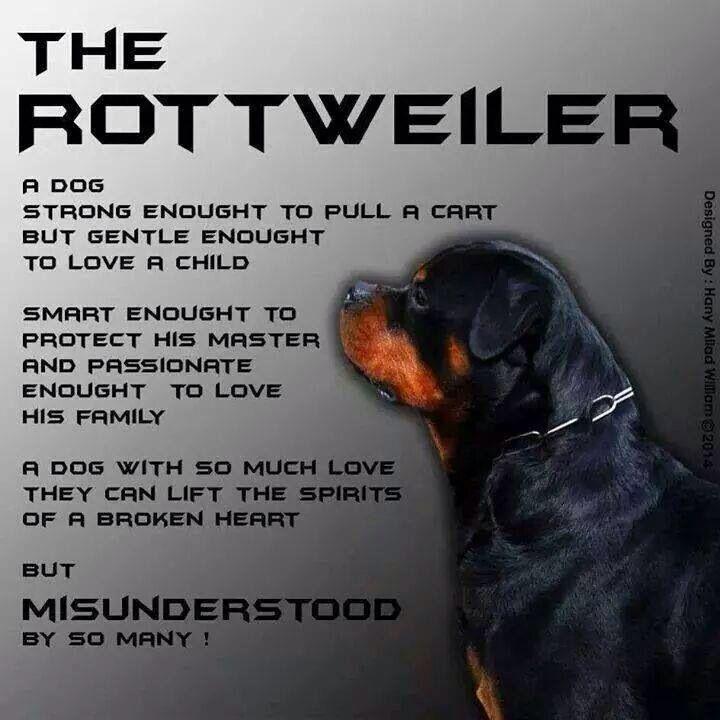 Rottweiler Rottweilers Pinterest Rottweiler Dogs And Puppies
