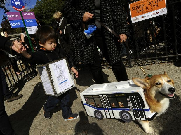 Dogs in costume via CBS News.