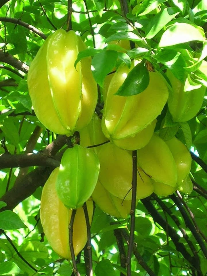 star fruit tree fruit salad