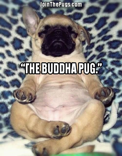 Join The Pugs Toocute Adorable Peace Four Corners Direct Inc