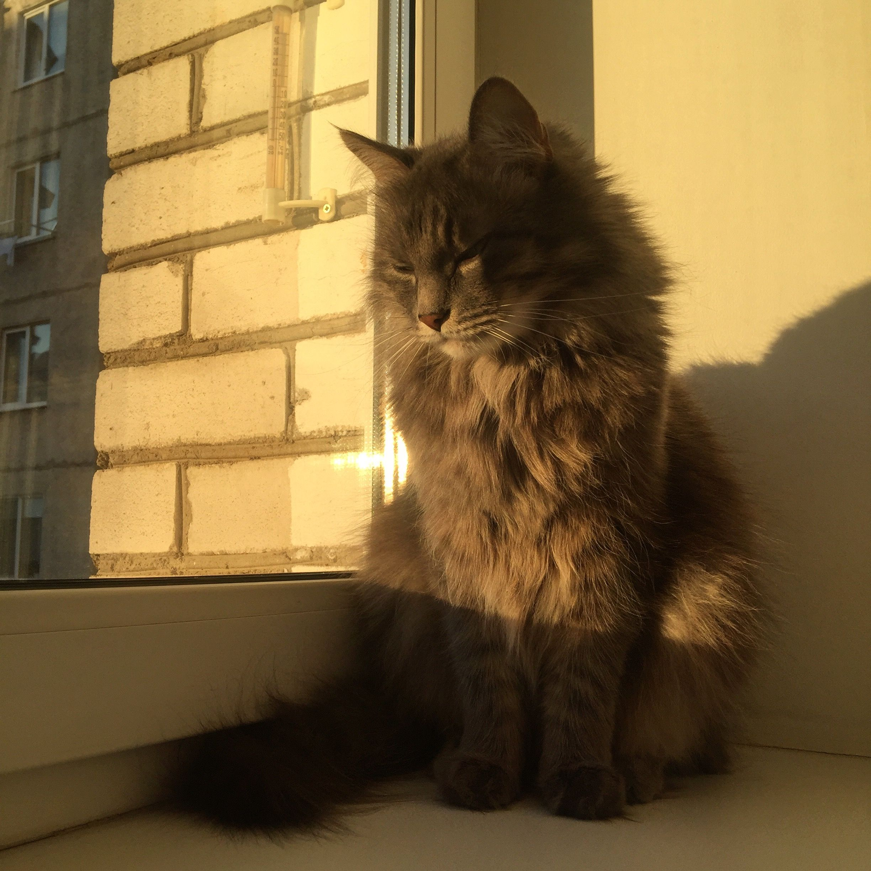 Pin van aestheticsxbyleona op kittens Schattig, Katten