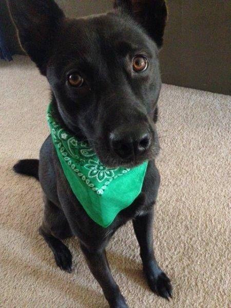 Timeline Photos Henry County Humane Society Inc Facebook Dog Runs Humane Society Losing A Dog