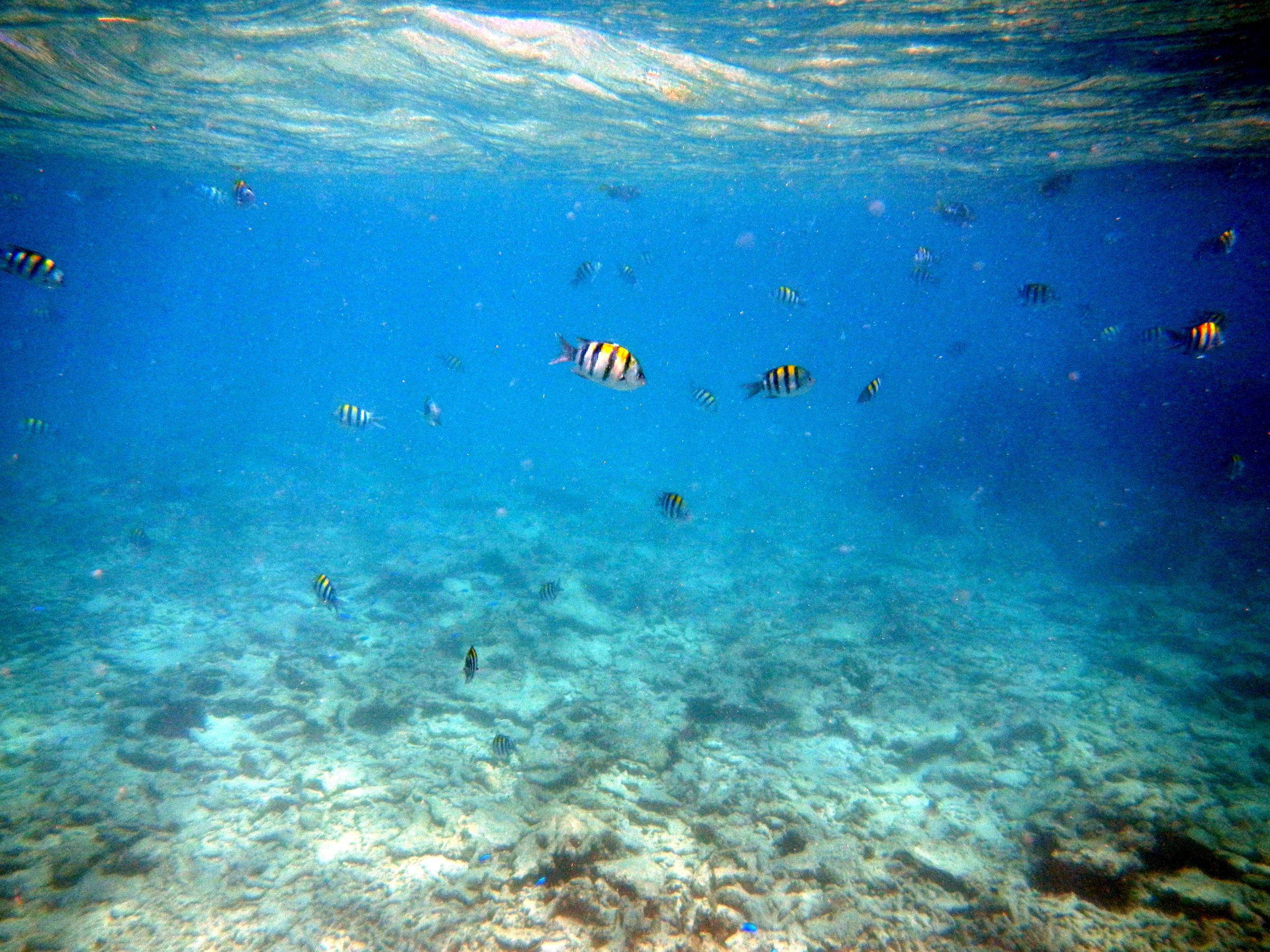 Anse Lazio sotto il pelo dell'acqua