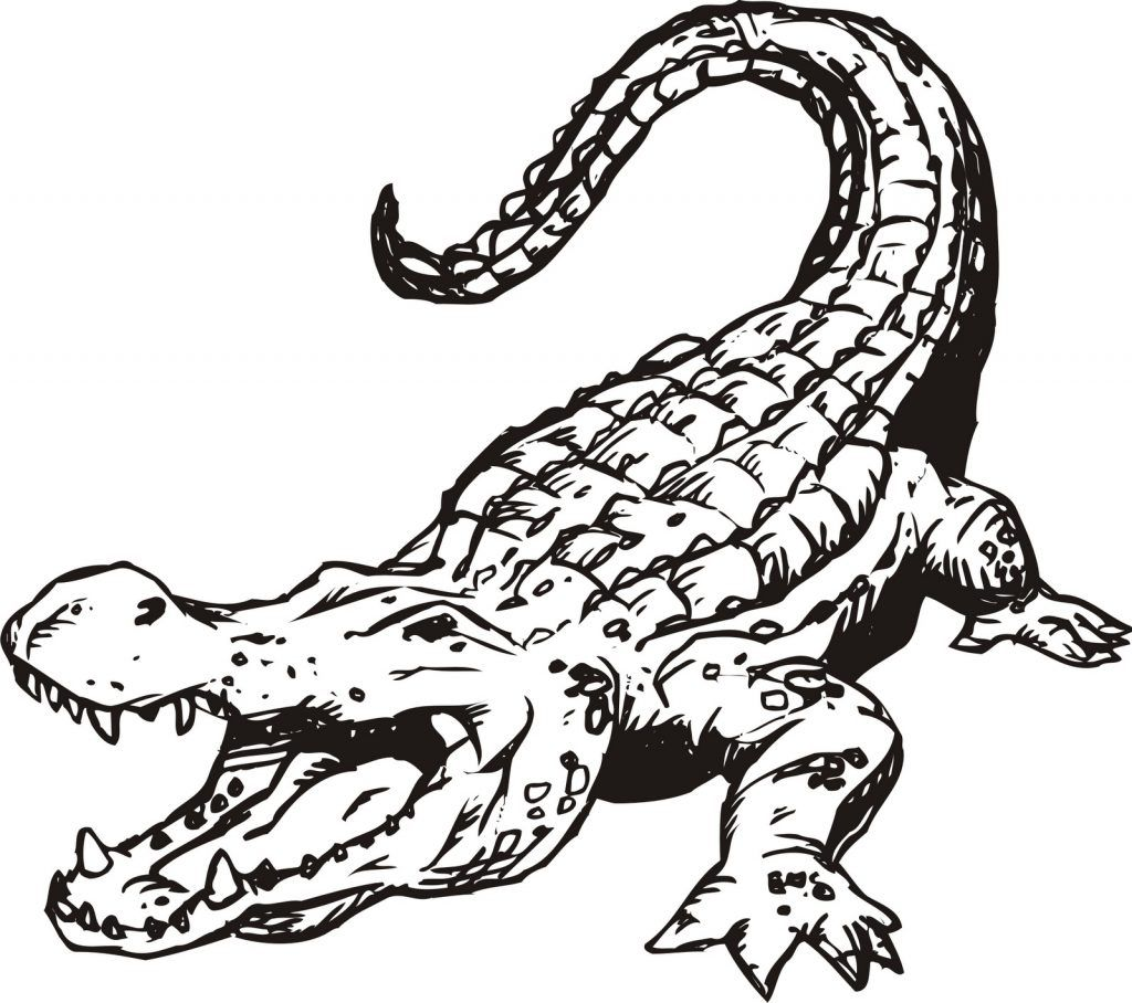 Crocodile And Alligator Coloring Pages Outline Drawings Animal