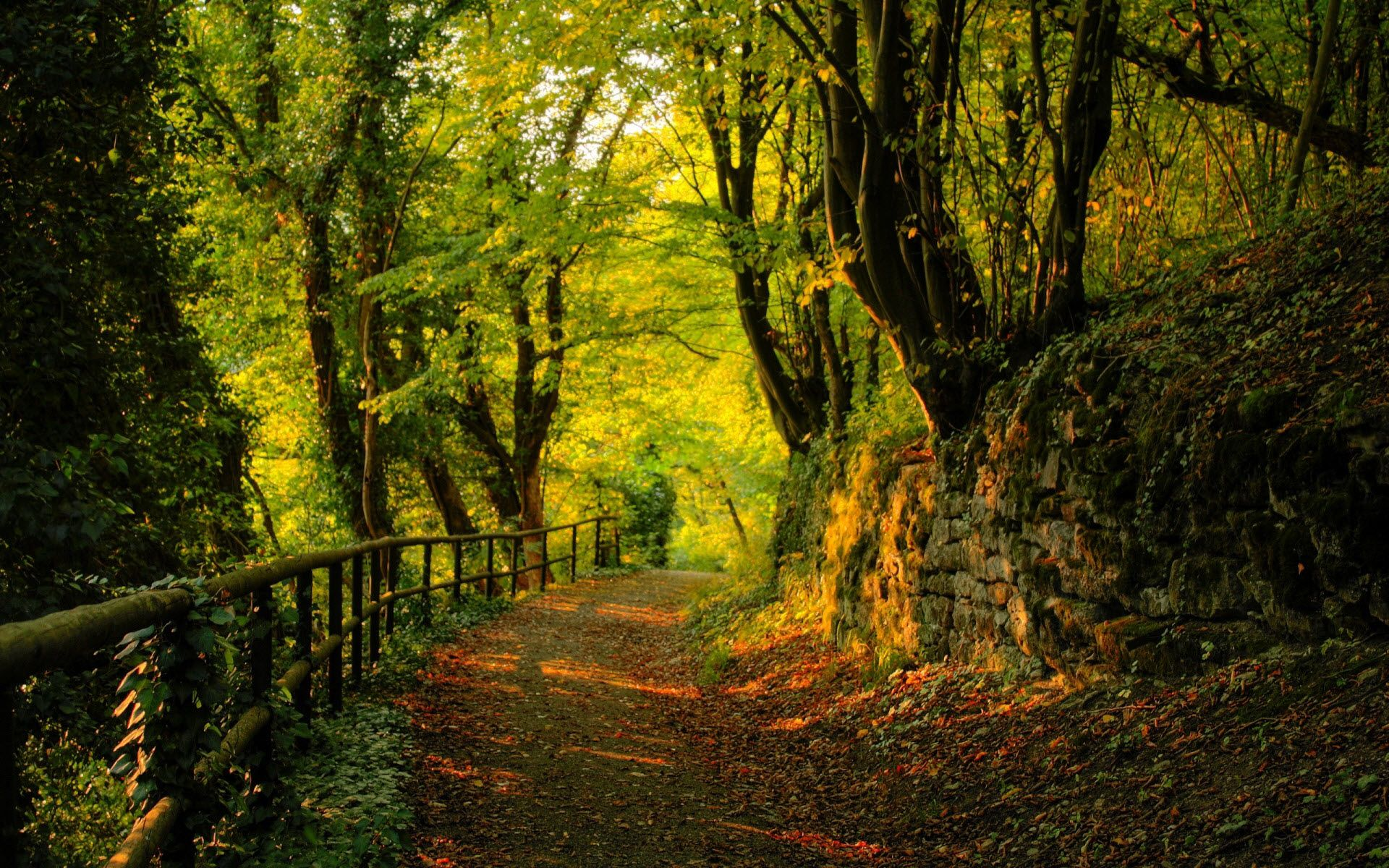 Walking Path Forest 1920 X 1200 Desktop Wallpapers Miriadna Com Scenic Wallpaper Forest View Forest Road