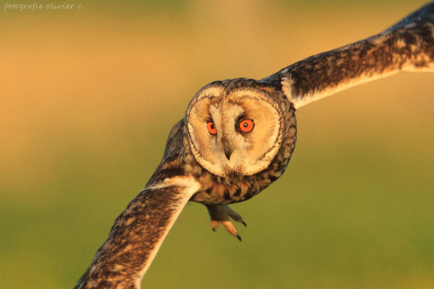 Focus and super close up by Olivier Colle on 500px