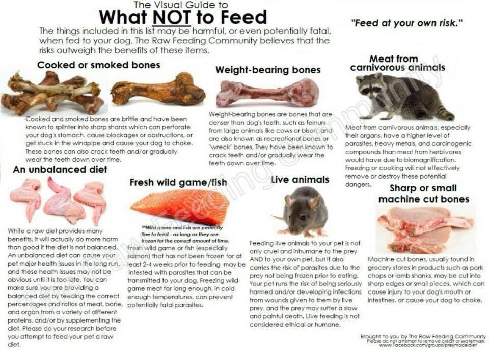 Raw Feeding Visual Guide Dog Food Recipes Raw Dog Food Diet