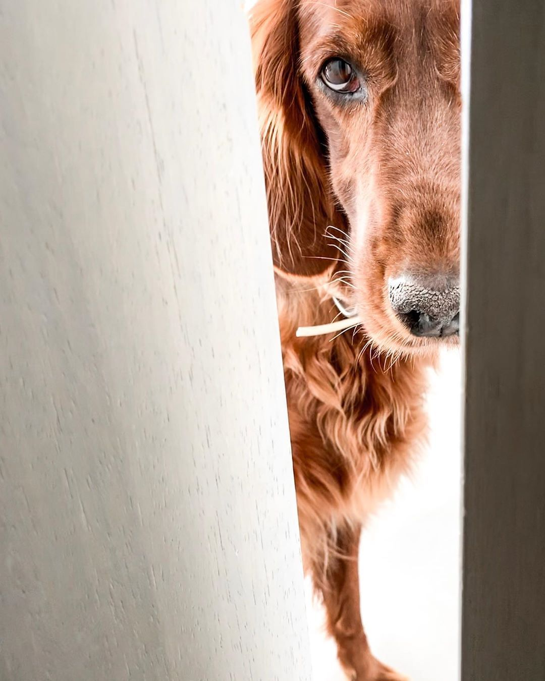 Of course, when cookies are packed in the kitchen, I'm standing right behind the door ...