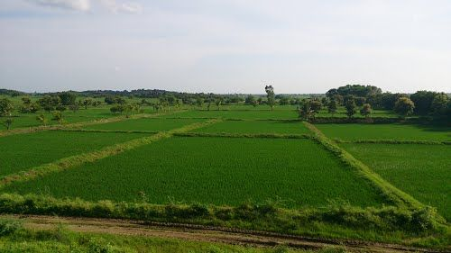 Agricultural Lands For Sale in Chevella Surroundings