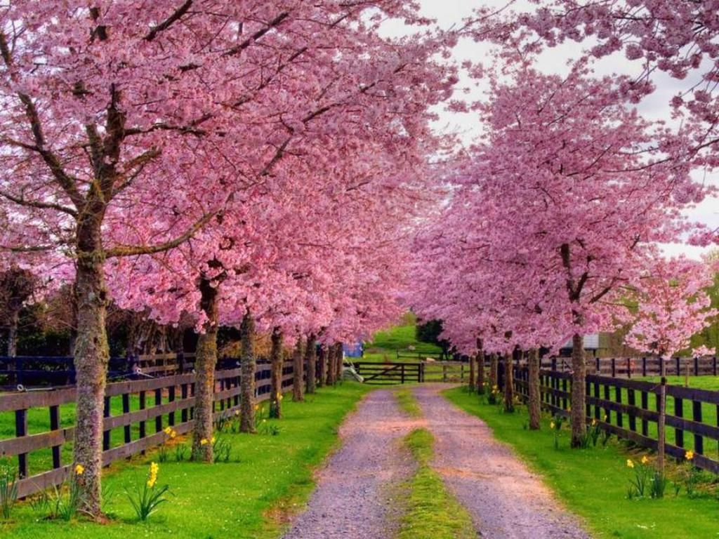 Free Spring Backgrounds