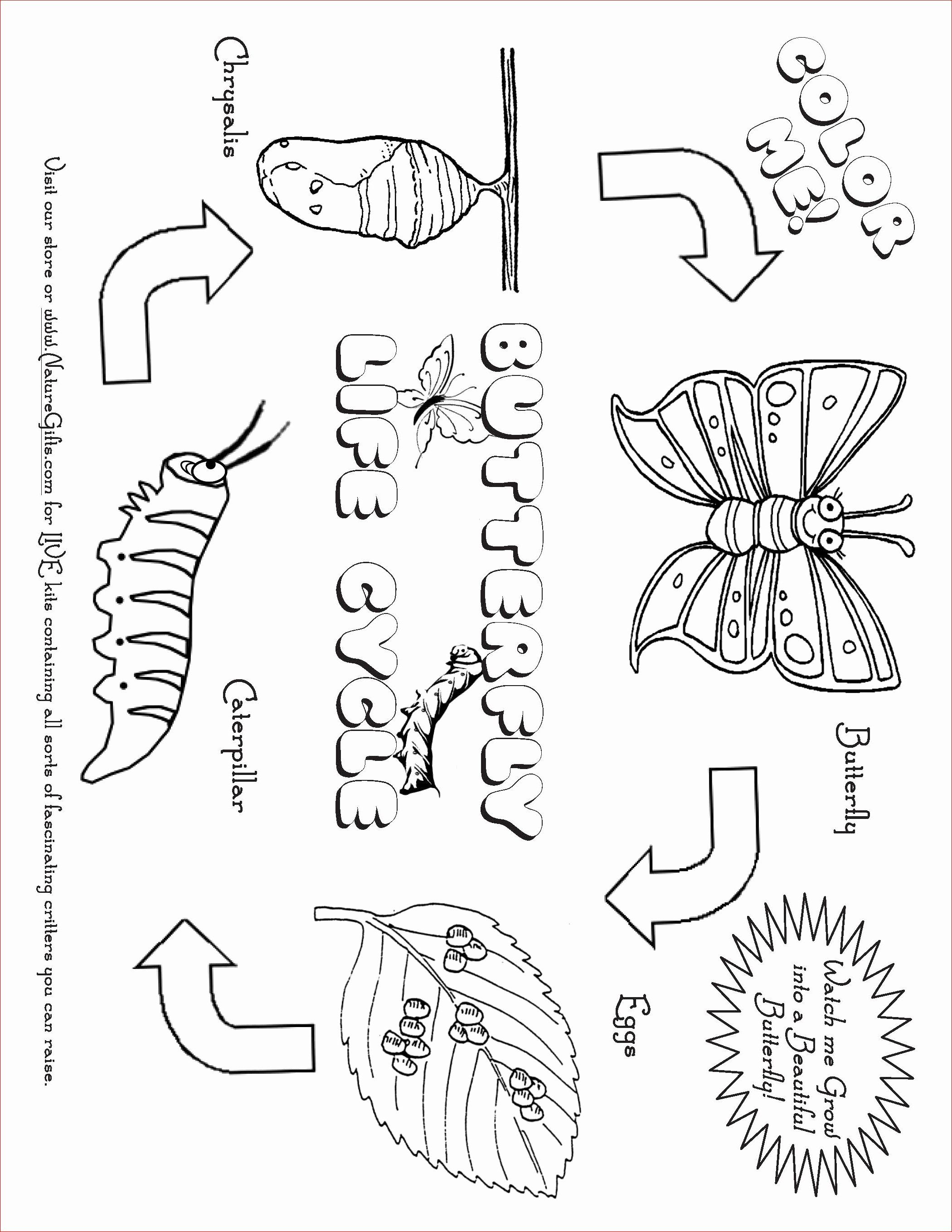 Coloring Pages Ecosystem Animals In