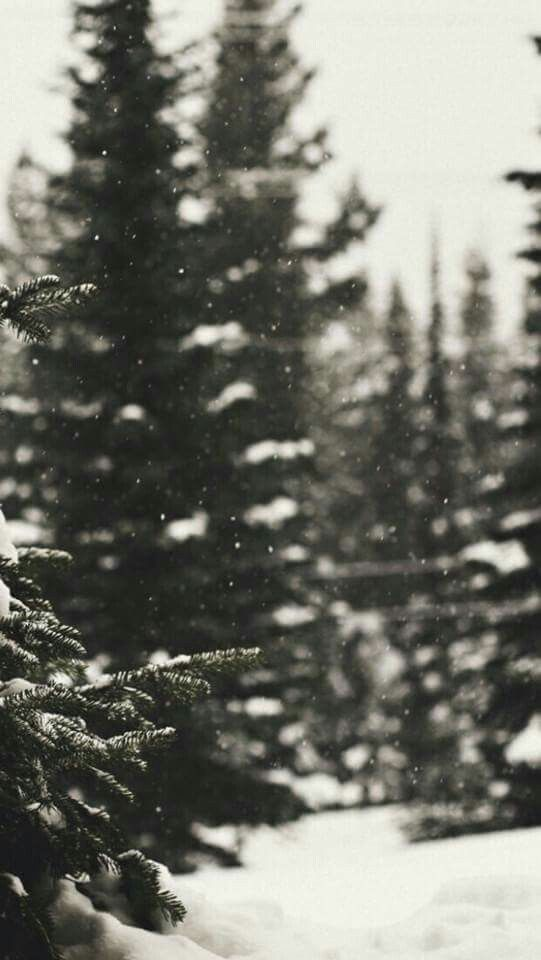 Christmas Forest. in 2020 Winter wallpaper, Christmas