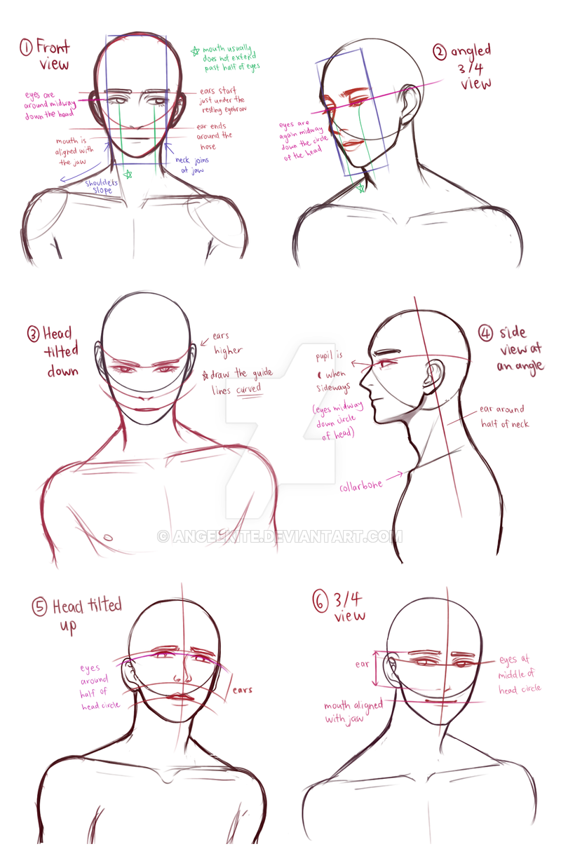 Drawing Busts By Angelkite On Deviantart Art Reference Poses Art Reference Deviantart Drawings