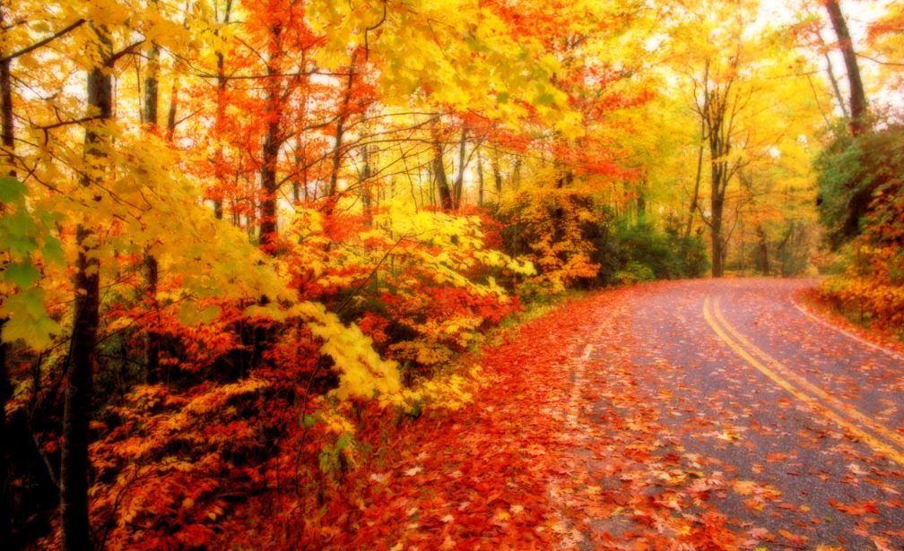 autumn wallpaper hd hd wallpapers pinterest