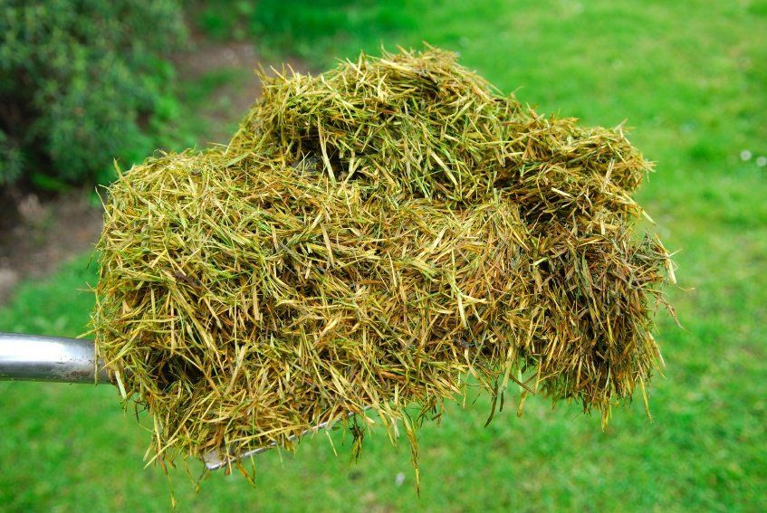8 things to do with lawn clippings