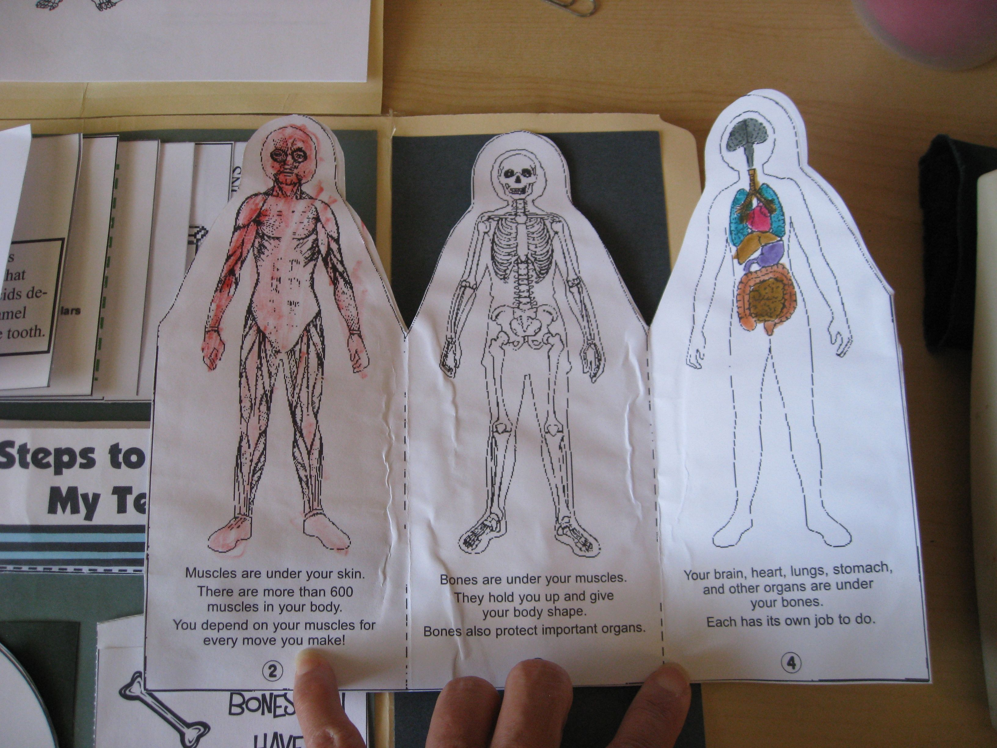 I finished putting together my son\'s human body lapbook. There was a ...