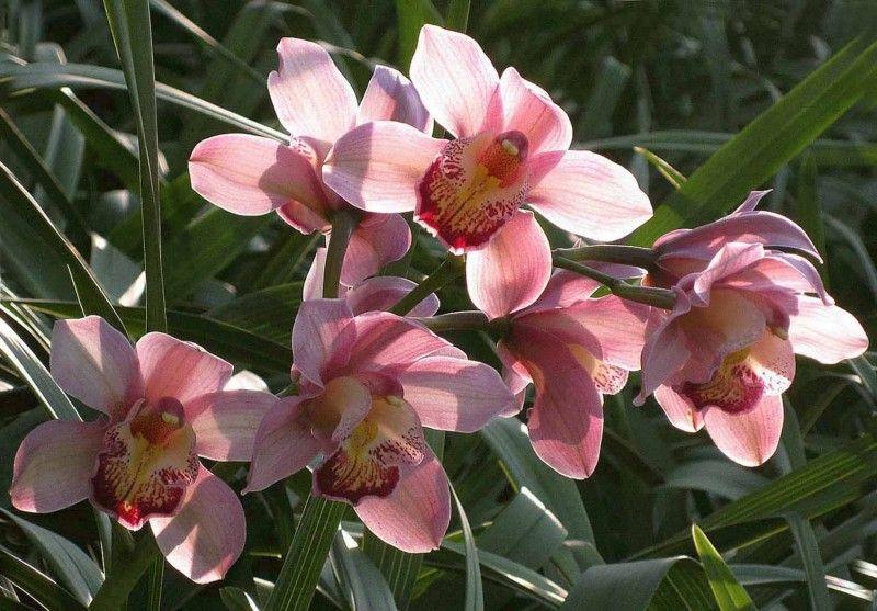 """Hoa Địa lan: Từ những năm 90, Đà Lạt bắt đầu rộ lên phong trào trồng các loại hoa sang trọng và quý phái. Trong đó, Địa Lan được xem như là """"Nữ hoàng của các loại hoa"""" bởi vẻ đẹp kiêu sa lịch lãm cùng với sắc mầu rất phong phú, hương thơm nồng nàn và có độ bền cao (khoảng 3 tháng mới tàn) nên Hoa Địa lan ở Đà Lạt được nhiều người ưa thích. Hoa thường nở hoa vào cuối mùa đông đầu mùa xuân, được trưng nhiều trong những dịp lễ, hoa ngày Tết."""