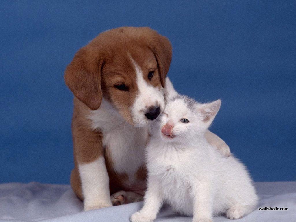 Cute Dog & Cat Mix Wallpapers Pinterest