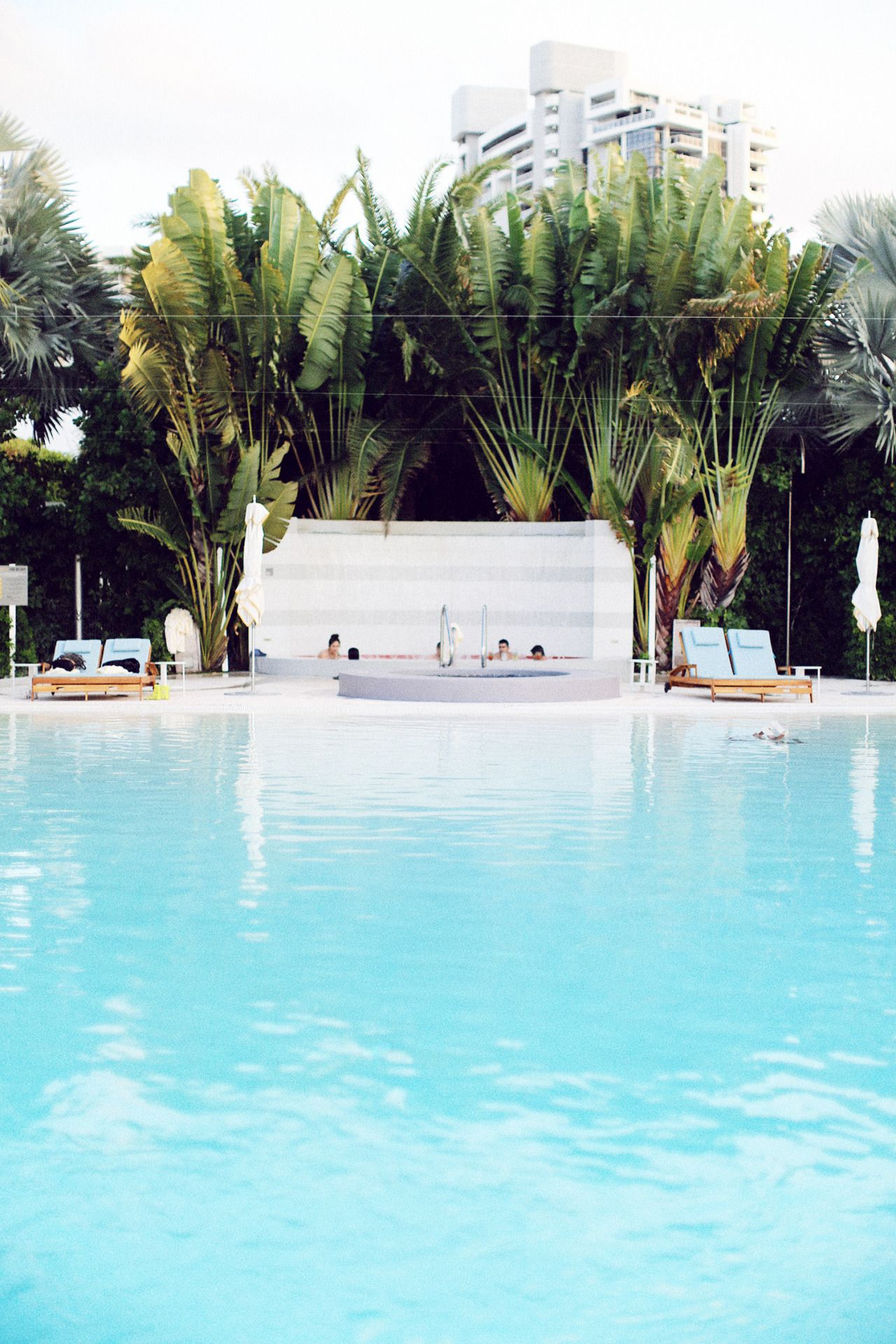 Turquoise pool and palms, The Standard Miami. Miami