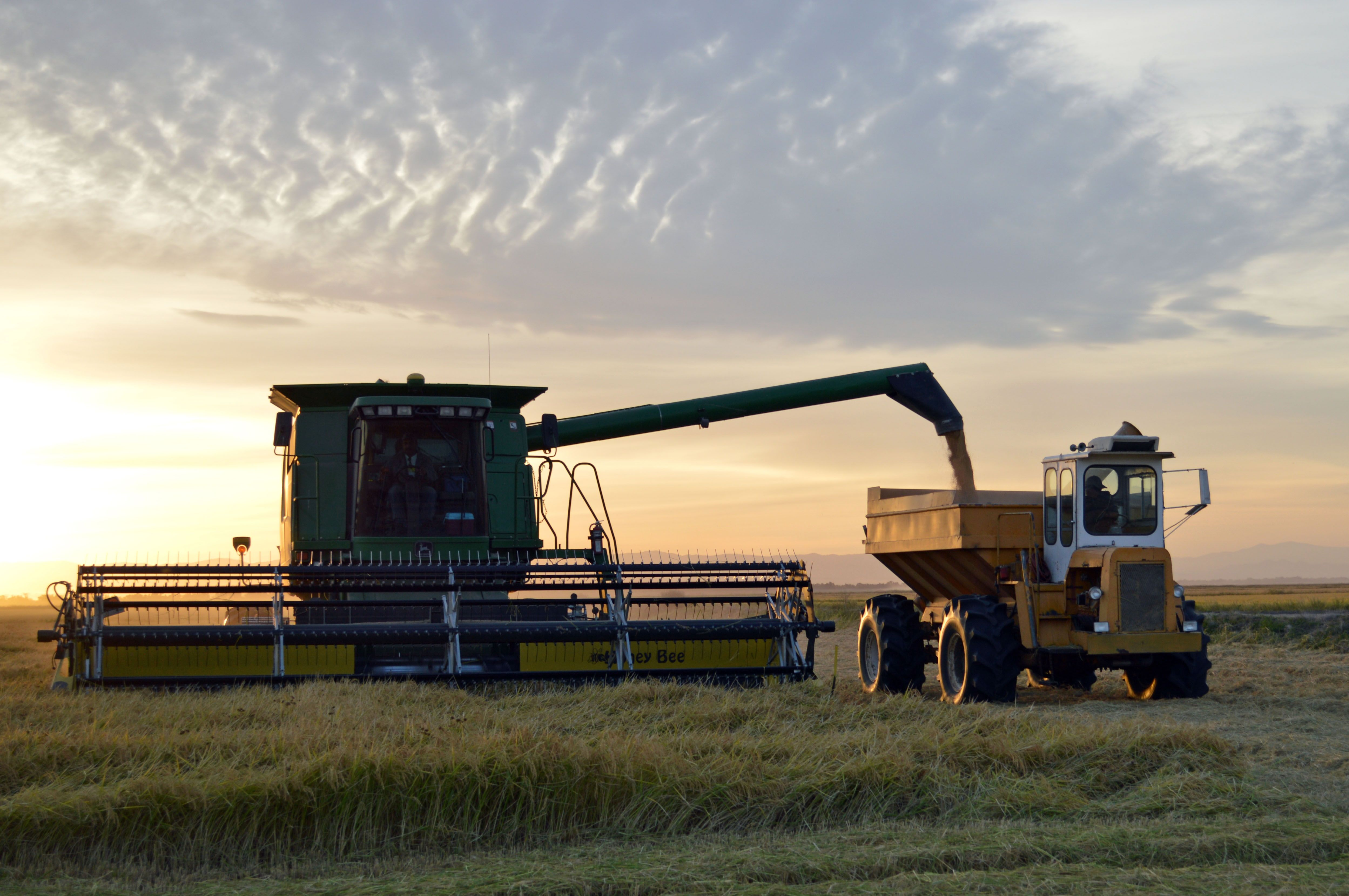 Sun starting to set on Norcal rice harvest
