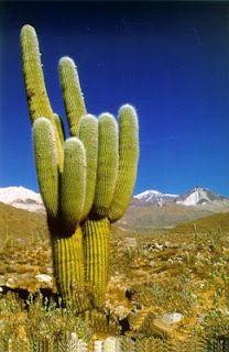 as comarcas esteparias más extensas se localizan en las latitudes medias. En estas regiones los veranos son muy calurosos y los inviernos fr...