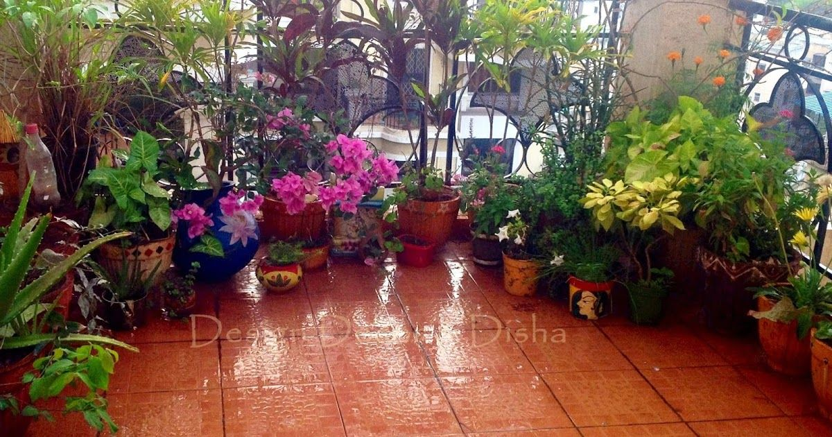 Prepping My Outdoor Space Before Monsoon