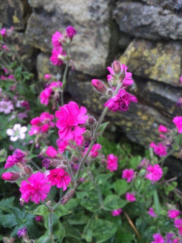 Free Plant Identification Perennials, Flowers, Garden