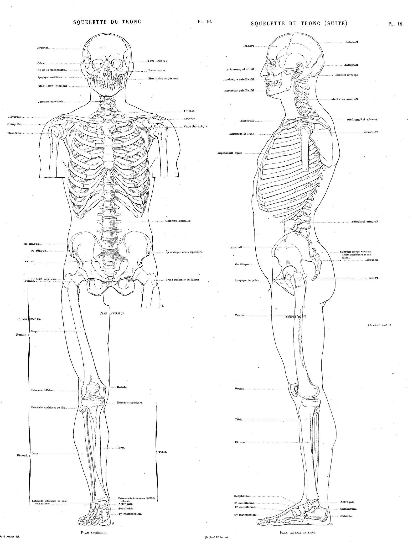 Artistic Anatomy - Paul Richer : Full Body | Art | Pinterest ...