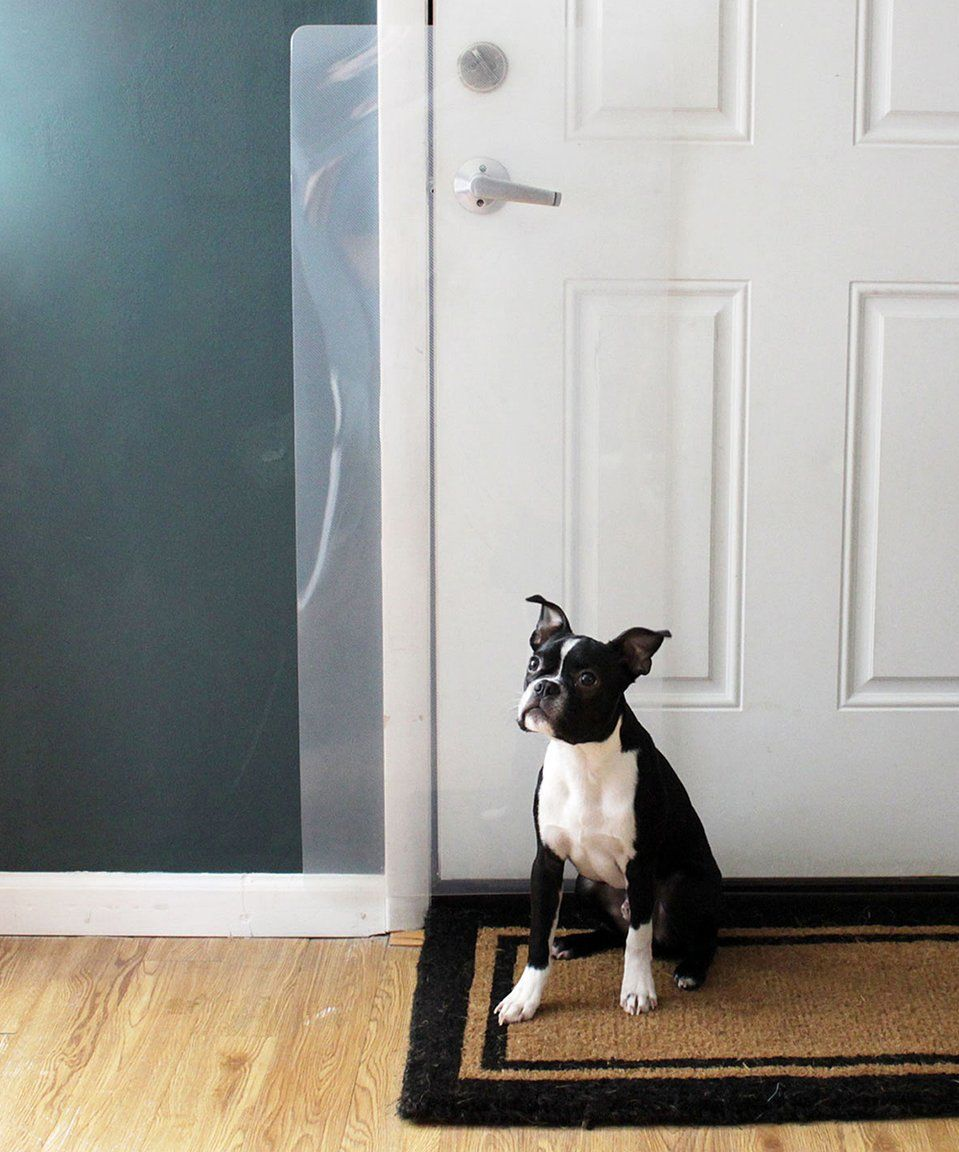 Take a look at this Original Door Shield today! Dog