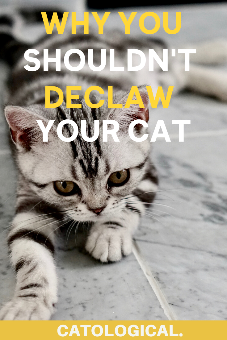 Should You Declaw Your Cat Or Is It Bad Reasons Why Not To Do It In 2020 Cats Cat Reading Cat Grooming