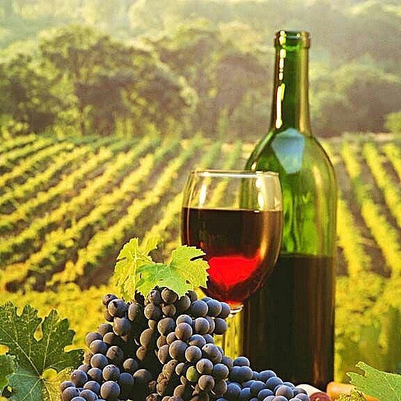 Drink deep friends #wine #winesofinstagram #wines #winelover #wineoftheday #winetasting #winetour #winery #loveit #cheese #beautiful #gorgeous #dreams #paradise #goodnight #sweetdreams #fantasy #dream #picnic #redwine #yummy #yum #yummyfood #yumm #vineyard #grapes #loveit