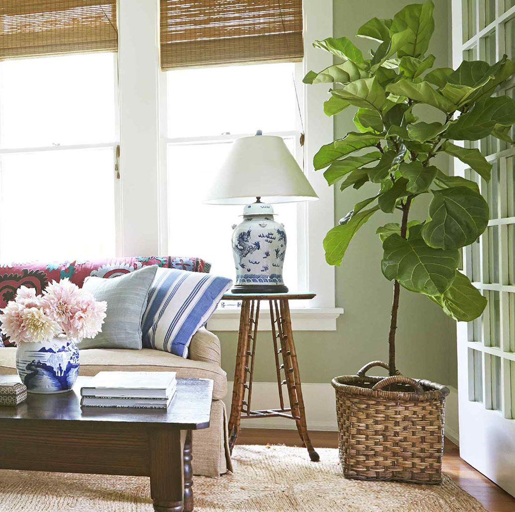 Run Don T Walk 13 Fiddle Leaf Fig Trees Are Back At 400 x 300