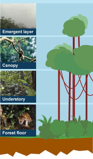 BBC rainforests ecosystems Geography revision