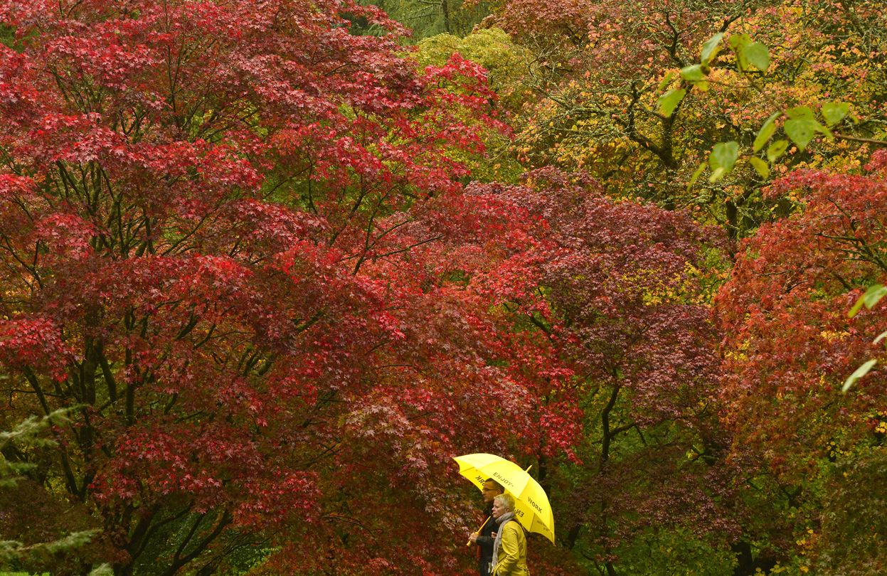 Visitors view the autumn foliage of acer trees in the Old Arboretum at Westonbirt in southwest England