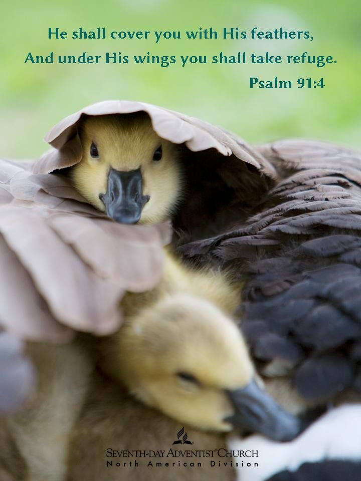 Pin by Mike De Los Santos on 1   Psalms, Psalm 91, Faith in god