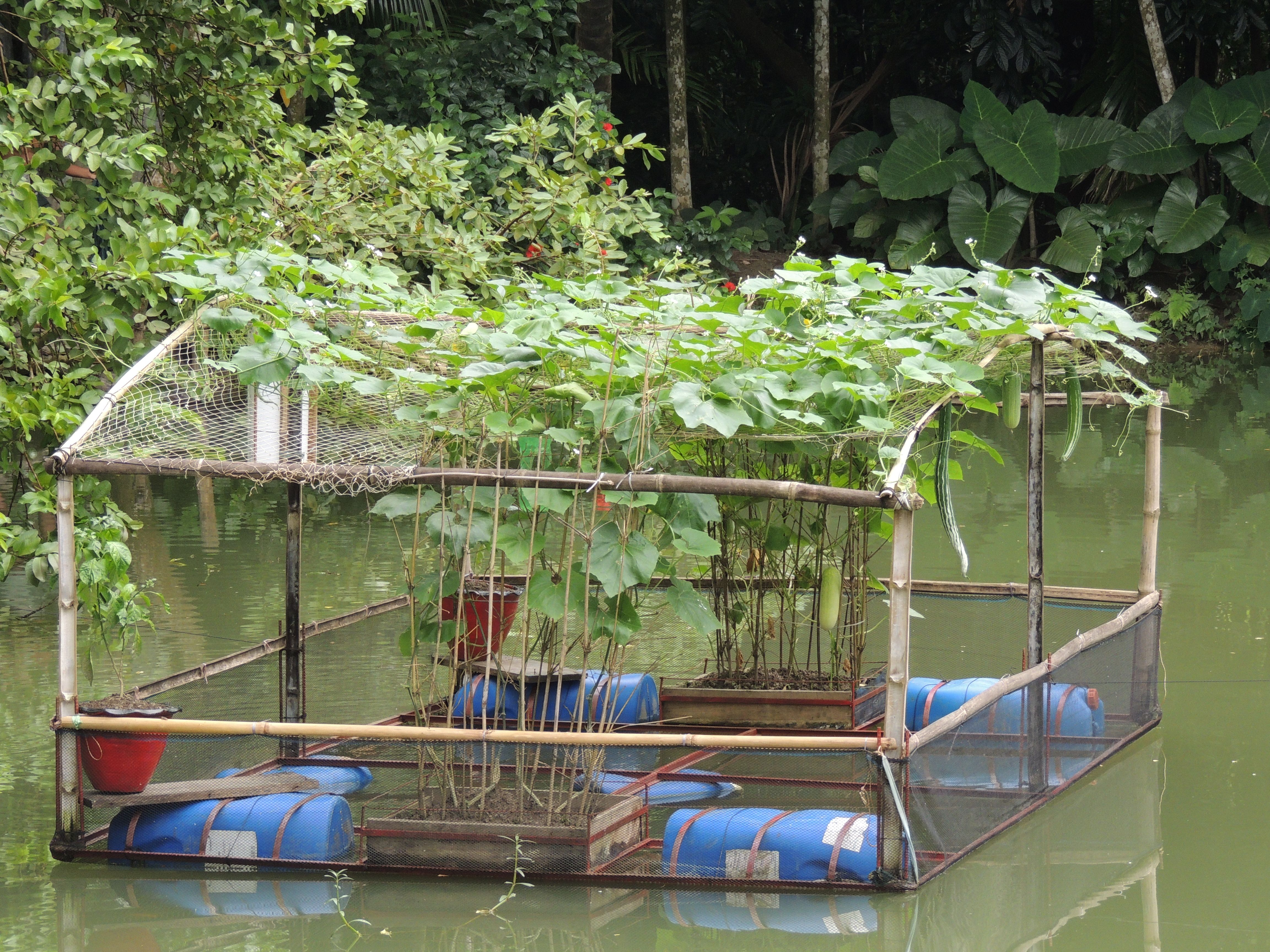 Integrated floating cage aqua geo ponics system ifcas for Floating fish pond