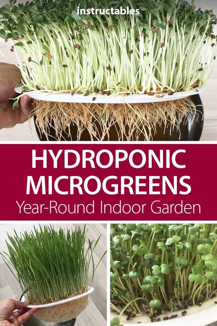 Hydroponic Microgreens Year Round Indoor Garden