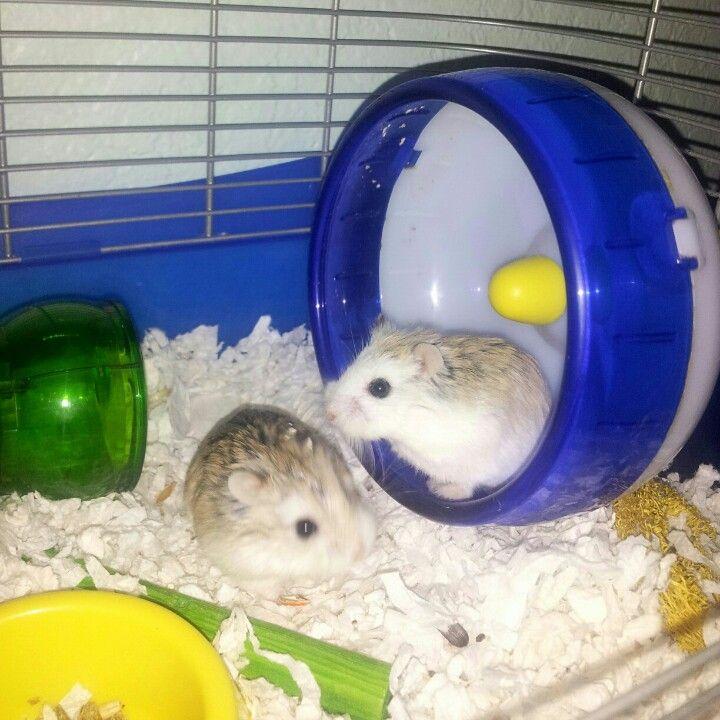 Omg I have that same hampster wheel Pets, Hamster, All