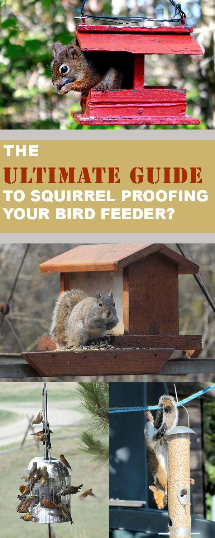 feff1f5a17be26d04775a8dbd015a164 - How To Get Rid Of Squirrels In My Ceiling