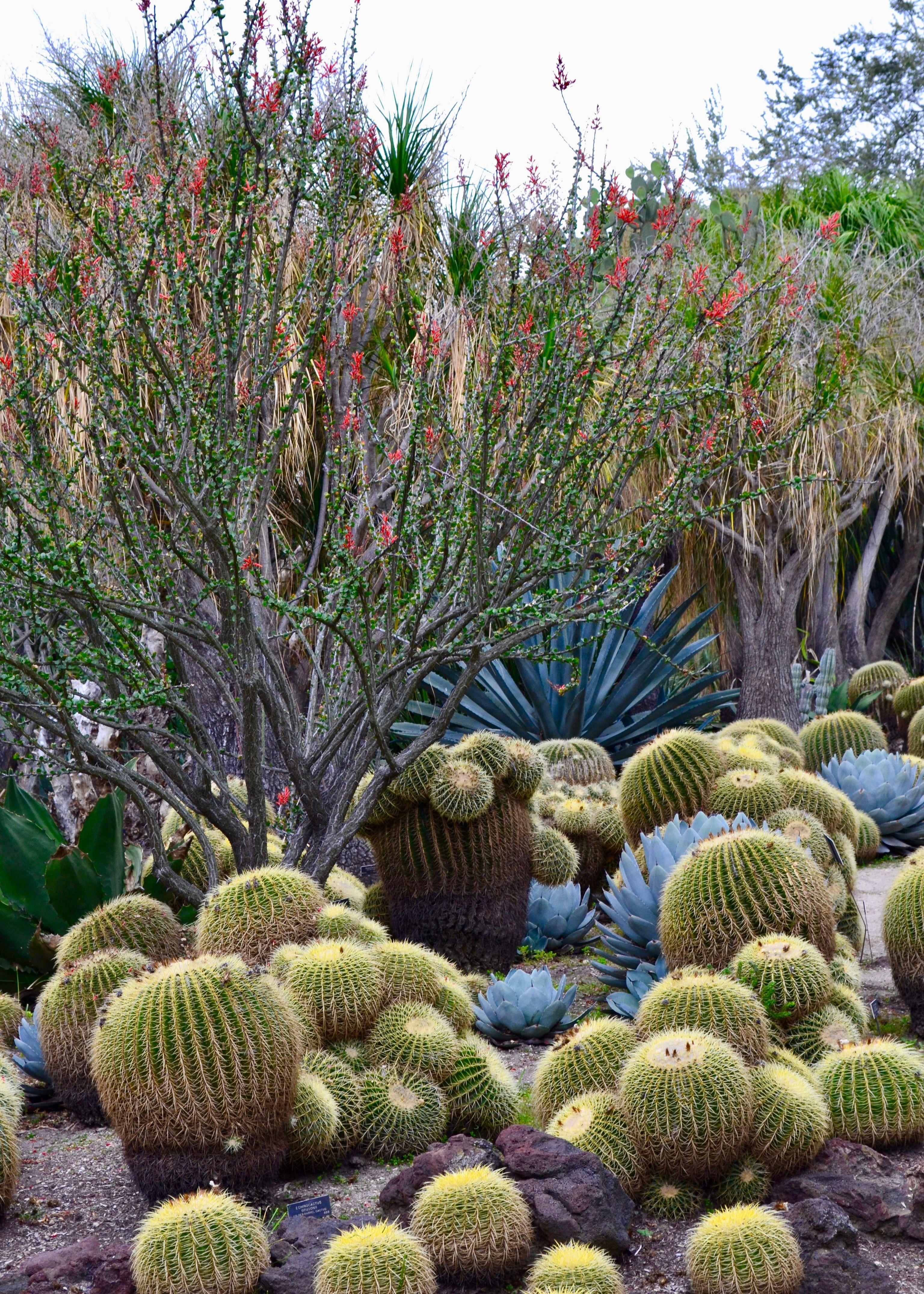 The Huntington Botanical Gardens Beyond Beautiful Desert Garden