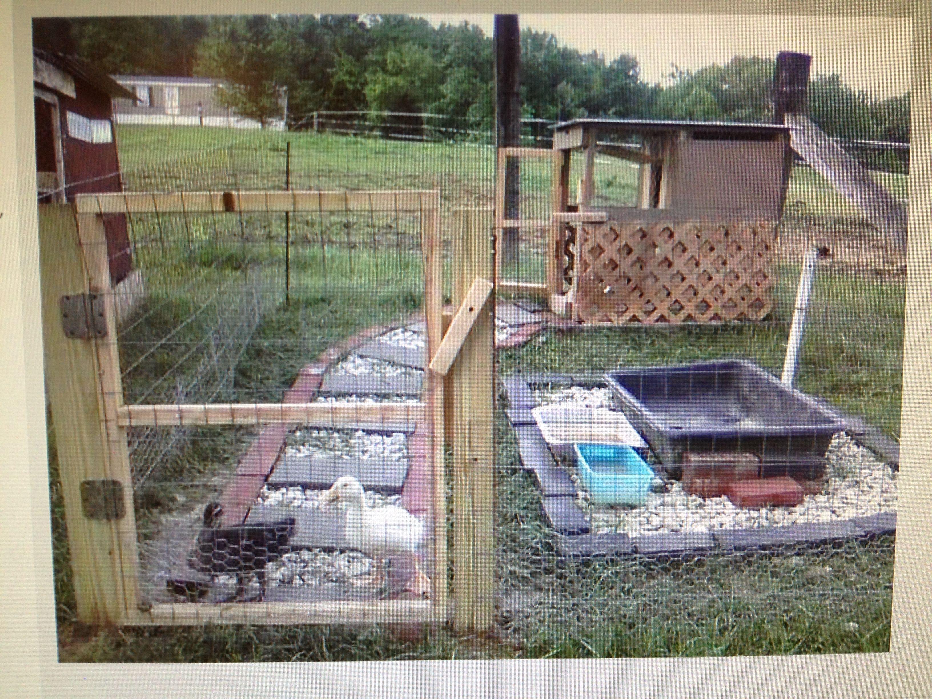 duck housing backyard birds pinterest duck house house and
